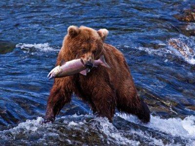 Putovanje Aljaska - oaza prirodne ljepote koja se ne propušta! Upustite se u avanturu.