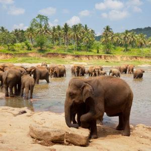 Šri Lanka – zemlja jedinstvenih otkrića i sretnih trenutaka- svakodnevni polasci!