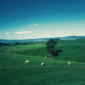 Novi Zeland – fantastična zemlja jedinstvenih prirodnih čuda