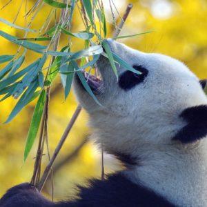LTL Mandarin – online kineski jezik s izvornim govornicima