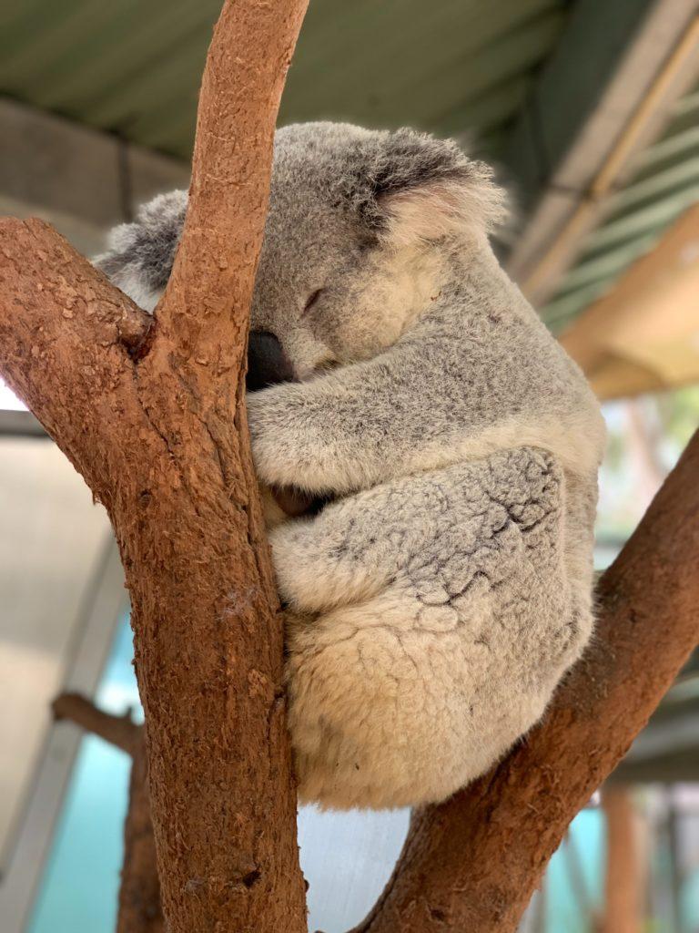 Australija - kako dobiti posao ili studirati u Australiji?